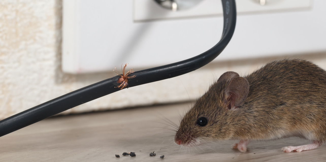 Mouse next to socket